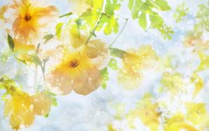 08_spring_flowers